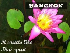 Pink-lotus-flower-in-Bangkok