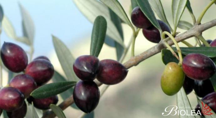 Crete once again: From Kazantzakis to Daskalogiannis