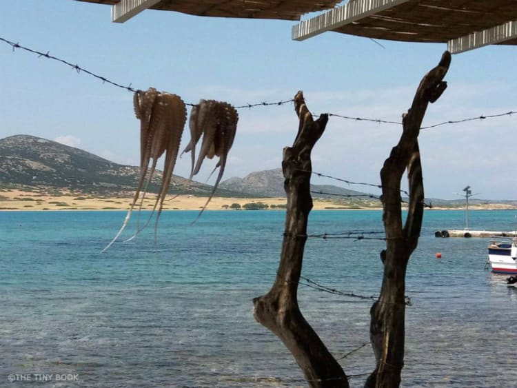 Octopus hanging on Agios Giorgos beach, Antiparos island. Greece