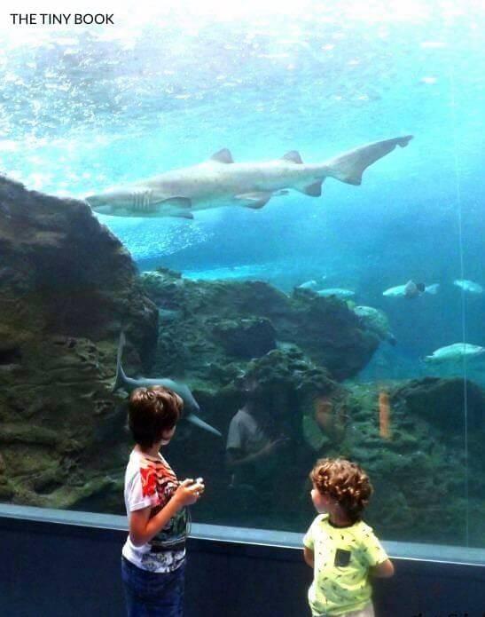 Sharks in Cretaquarium, Gouves (Heraklion).