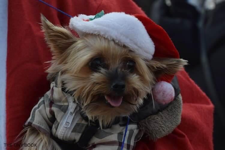Santa run Chania: dog dressed as santa claus