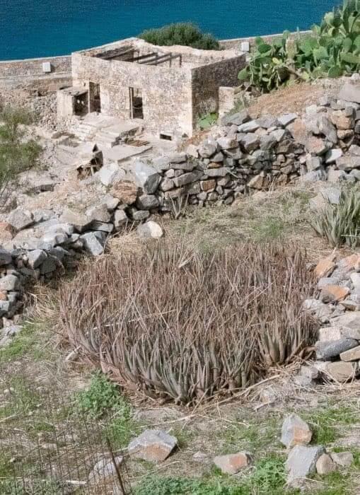 Aloe vera, Spinalonga.