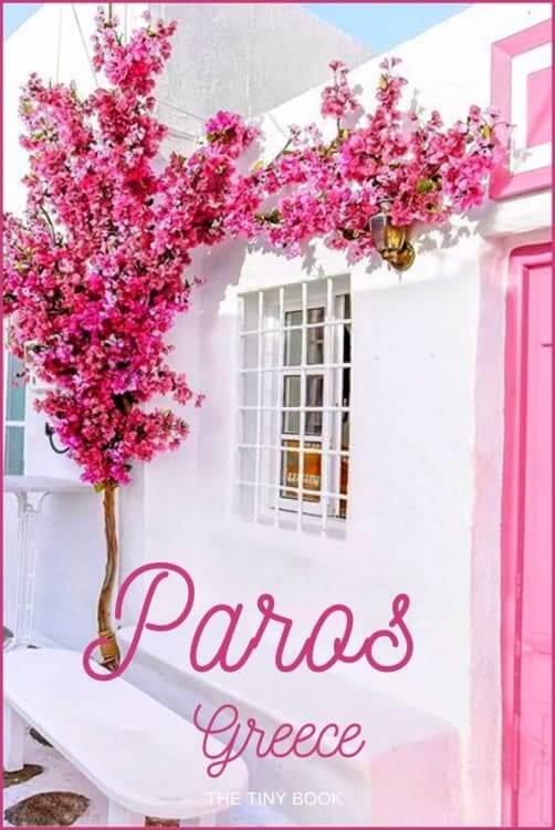 Paros Greece pink flowers
