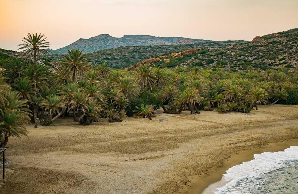 beach, sand, palm grove, Vai Beach, Crete