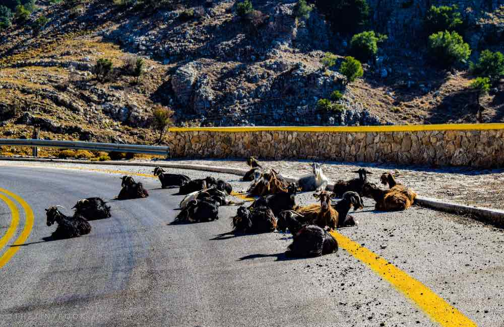 road, goats, mountains, Crete