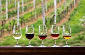 GLASSES OF WINE - WINE TASTING