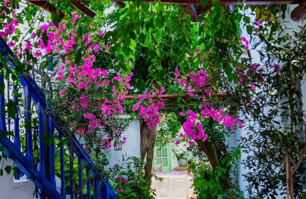 GREECE - MYKONOS - CYCLADIC HOUSE - BOUGAINVILLEA