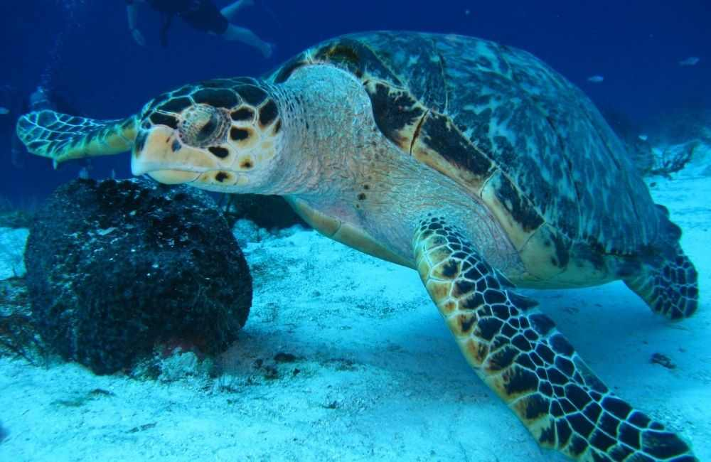 Want to discover the top spots for scuba diving in Crete? Read on!