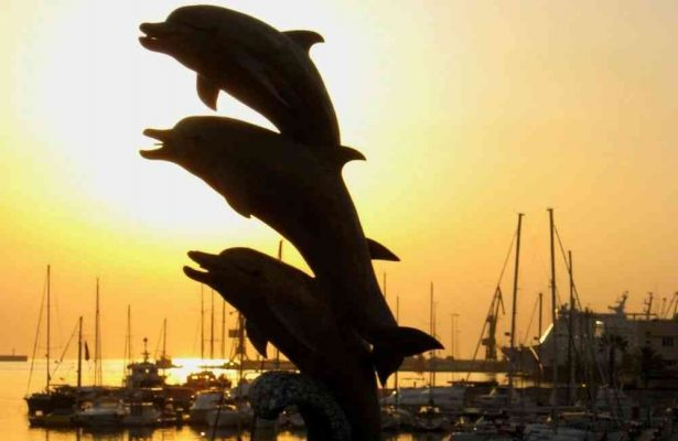 free things to do in heraklion - Heraklion, Crete Dolphins