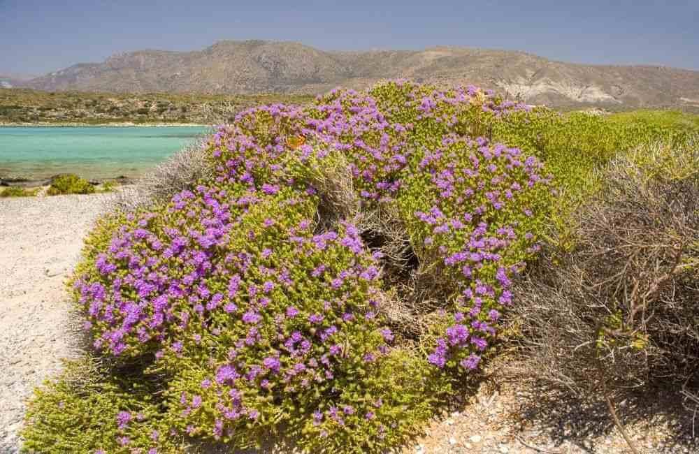 Balos, Crete in Spring