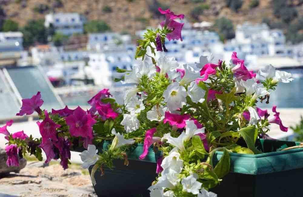 Crete in Spring Loutro