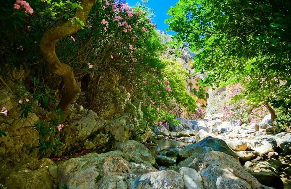 Trail-in-Kourtaliotiko-Gorge-Gorges-in-Crete